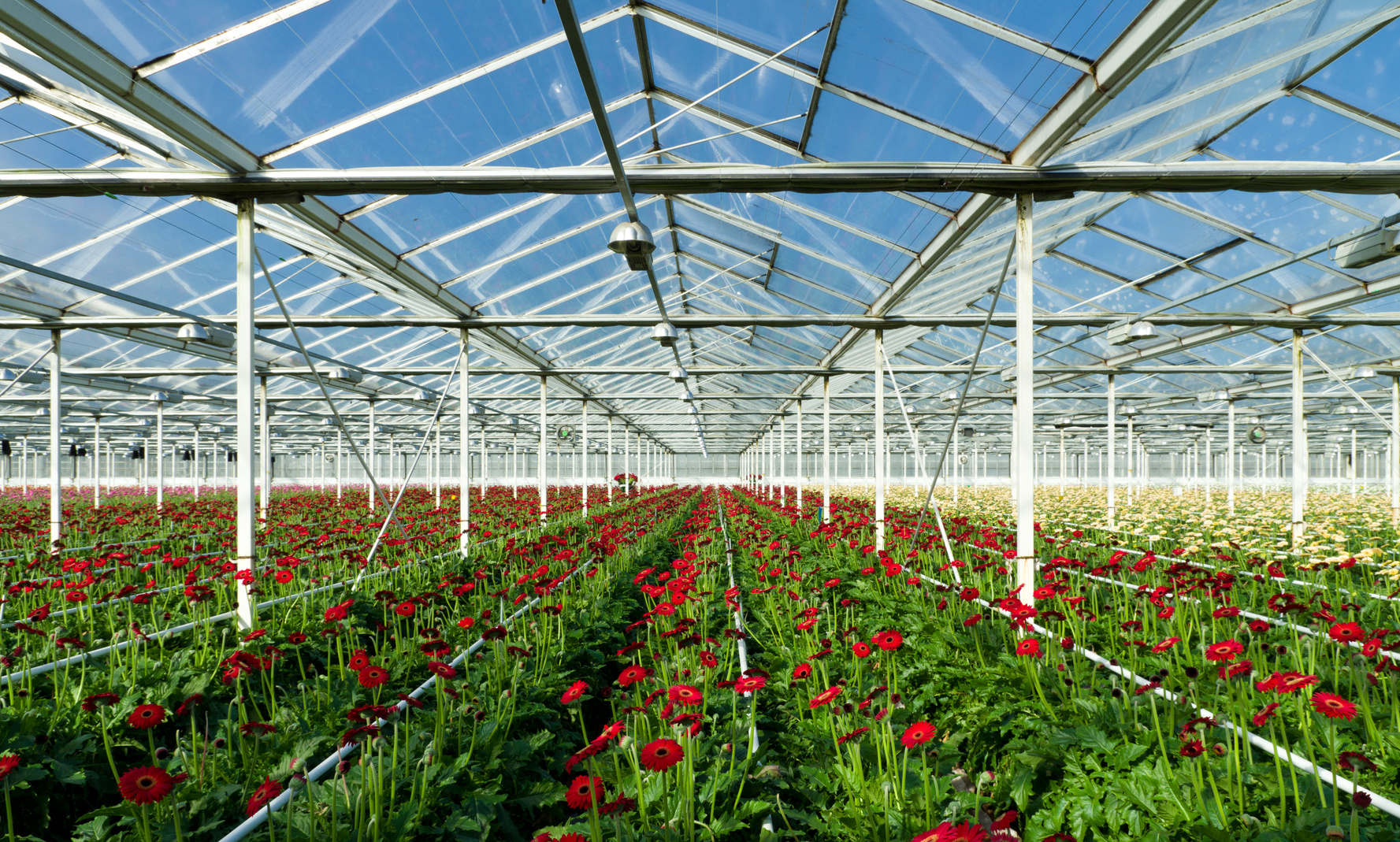 horticulture in greenhouse