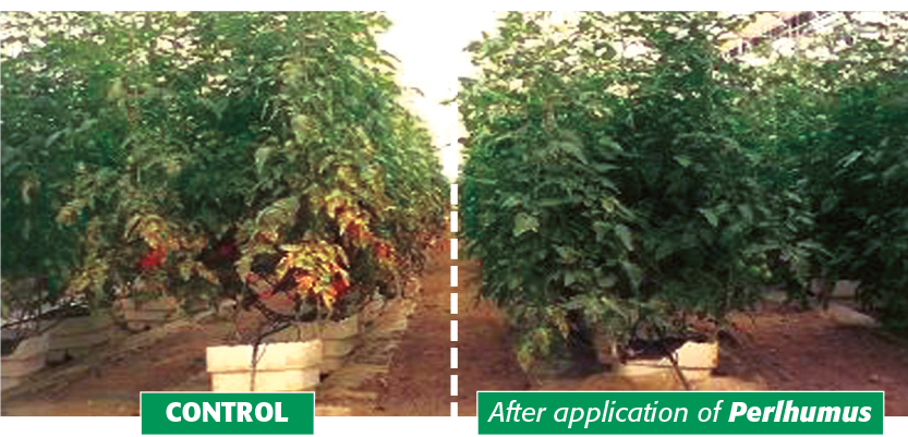 Horticulture after application of PERLHUMUS