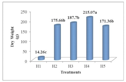Effect of different humic acid levels on dry weight of Calendula officinalis L.