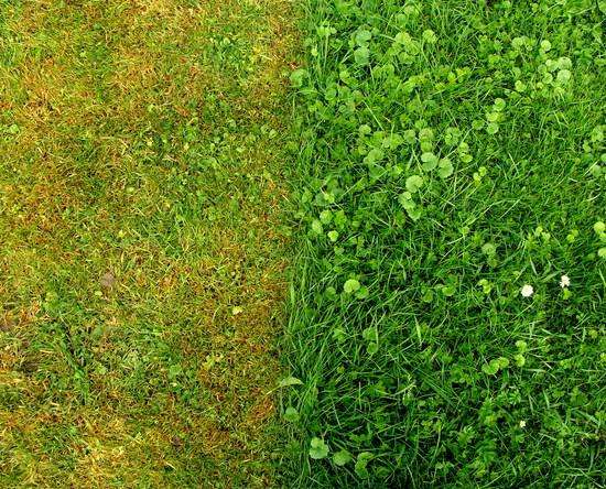 comparison of turf without and with humic acid treatment