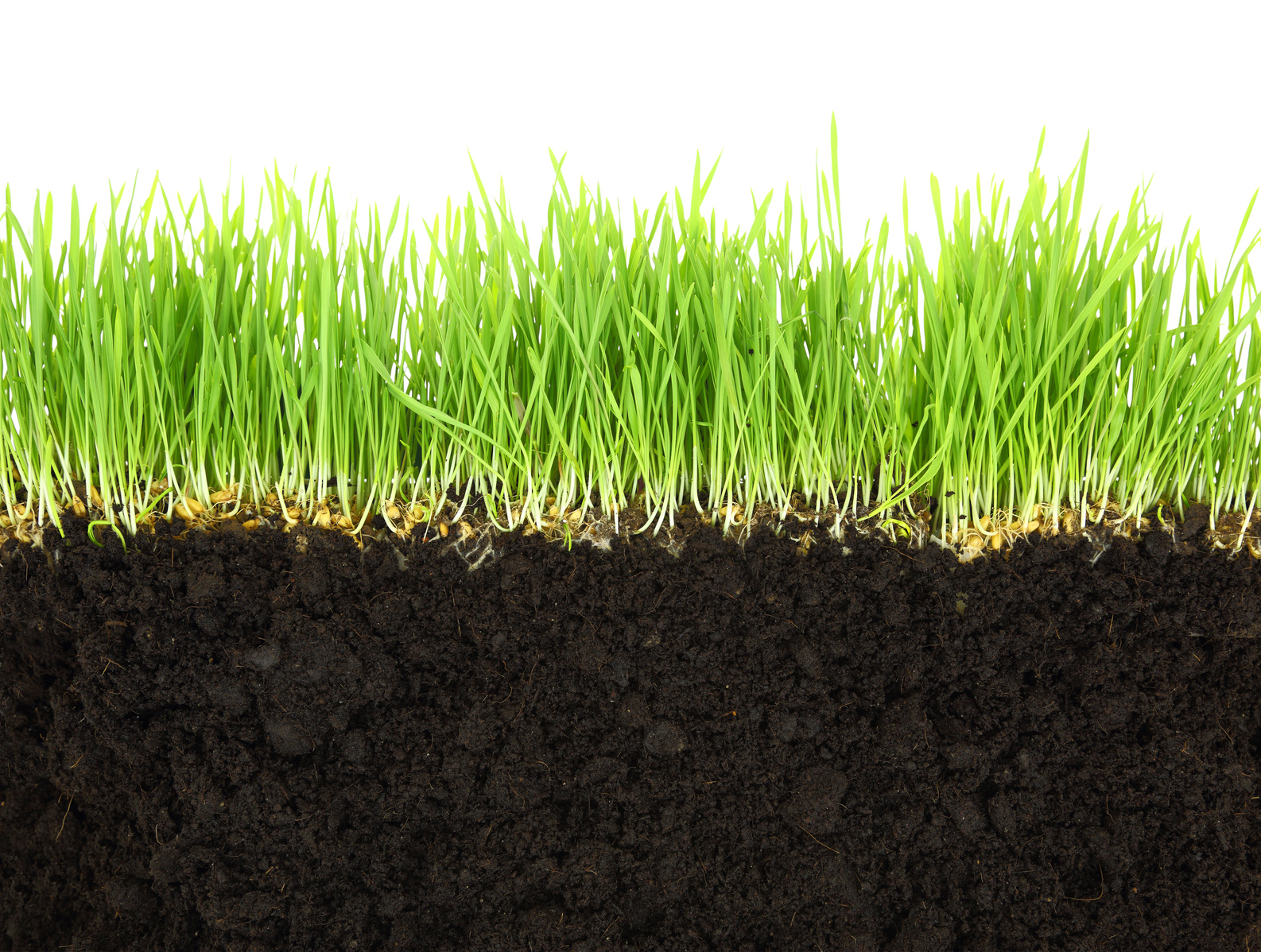 symbolic image of turf with grass sward and soil