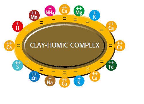 clay-humic complex Increased nutrient deposit by humic acid