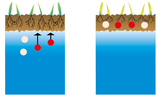 Humic acids reduce the effects of salinity
