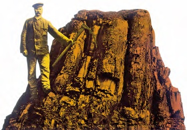 Remains of a sequoia trees of the Tertiary period (found in the coal-mine Donatus, West Germany in 1907)