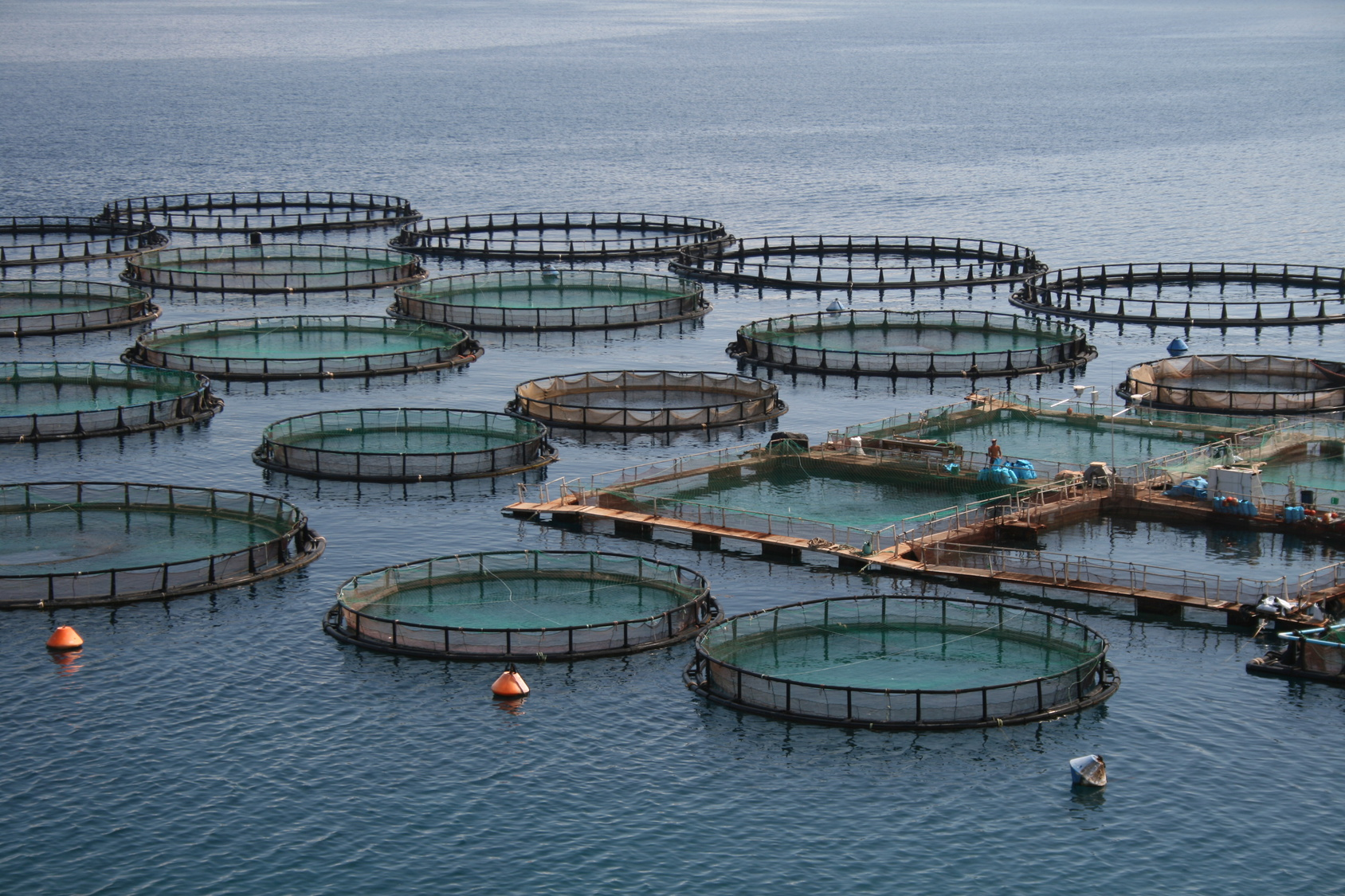 HUMINTECH livestock breeding fishfarm fishbowl